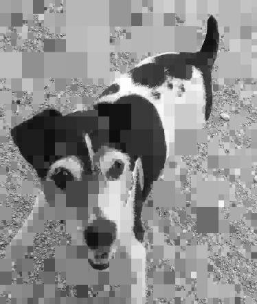 Max-pixel.jpg